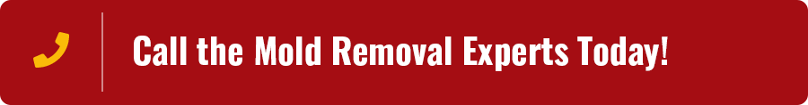 Cumberland City TN Mold Removal Services